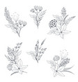 collection hand drawn herbs and vector image vector image