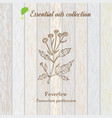 pure essential oil collection feverfew wooden vector image vector image