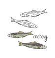 hand drawn fish anchovy black and white and color vector image vector image