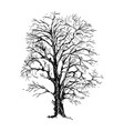 hand drawn sketch tree vector image vector image