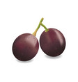 object fruit grapes vines vector image
