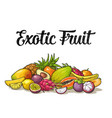 set exotic fruits with calligraphic lettering vector image vector image