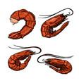set shrimps on white background design vector image vector image