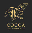 cocoa beans with leaves on dark background cacao vector image vector image