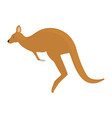 kangaroo animal zoo vector image vector image