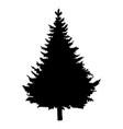 single black silhouette pine tree vector image vector image