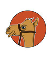 camel icon design vector image
