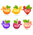 collection of fresh stylized fruits and berries vector image vector image