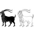 mountain goat capra - black silhouette and outline vector image vector image