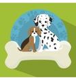 pet shop design vector image vector image