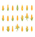 set of corn with green leaves vector image vector image