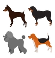 Set of purebred dogs vector image vector image