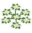 yellow plumeria flower tree top view draw on white vector image vector image