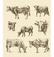cows hand draw sketch vector image vector image