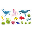 sea life isolated vector image
