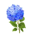 Blue Hydrangea Isolated vector image vector image