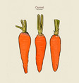 carrot hand draw sketch vector image vector image