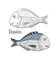 hand drawn fish dorado black and white and color vector image vector image