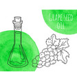 hand drawn grape seed oil bottle with green vector image vector image