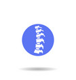 human spine vector image vector image