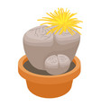 living stone cactus icon cartoon style vector image vector image