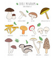 set of edible mushrooms with titles on white vector image vector image