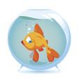 Gold fish vector image
