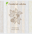 pure essential oil collection hop wooden texture vector image vector image