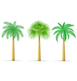 palm tree 16 vector image
