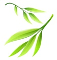 Branch with green bamboo leaves vector image vector image