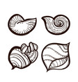 collection various seashells coloring book vector image vector image