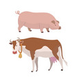 Cow and pig eco farming of