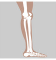 human knee vector image vector image
