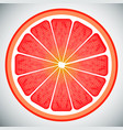 piece of grapefruit high quality vector image