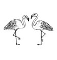 flamingo bird engraving vector image