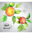Hand drawn apple branches with watercolor texture vector image