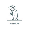 meerkat line icon linear concept outline vector image