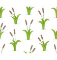 seamless pattern with bulrushes vector image vector image