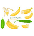 set tropical palm banana leaves and single peeled vector image