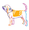 colorful decorative portrait of bloodhound dog vector image vector image