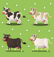 cows on green grass vector image