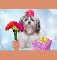 shih tzu dog gift vector image