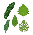 white background with set of green leaves vector image vector image