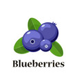cartoon blueberries with leaves isolated vector image