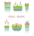 collection of indoor plants in striped pots vector image