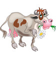 Flower Cow vector image
