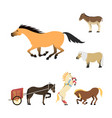horse pony stallion isolated different breeds vector image vector image