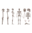 human skeleton body bones and skull set vector image vector image