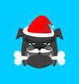 santa dog and bone christmas home pet xmas and vector image