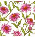 echinace purple pattern vector image